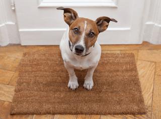 Dog on mat